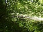 Зеркальная гладь сочную зелень крон леса отражает