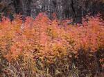 Костер листьев пламенем горящих