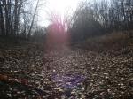 Дорога, усыпанная прошлогодними листьями