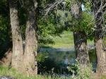 Вид на озеро сквозь стволы деревьев