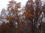 Кроны деревьев багряными красками налиты
