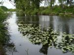 Озеро с кувшинками