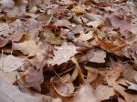 Бусинки октябрьской влаги на опавших листьях