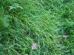 Капельки росы на листьях изумрудных