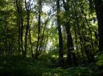 Очарование леса осеннего