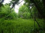 Яркость сочных весенних древ и трав